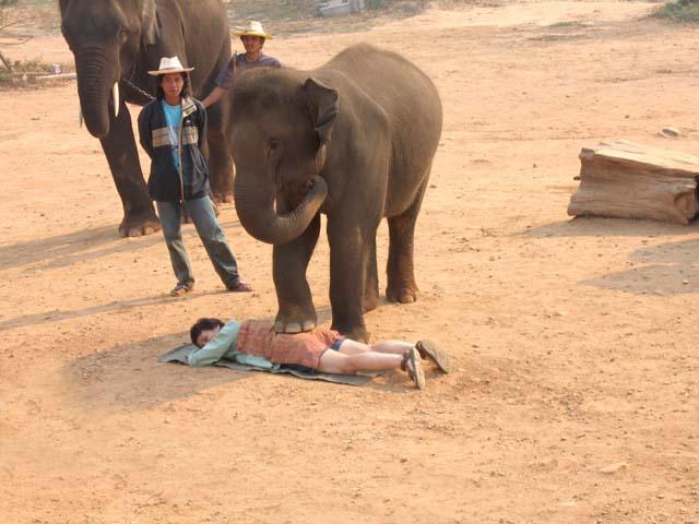 elephant thai massage horsens orchid thai massage